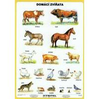 Domácí zvířata LAMINO A4
