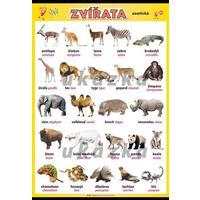 Zvířata - exotická XL - nástěnný obraz /70x100cm/  včetně lišt