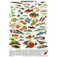 Akvarijní ryby II. - nástěnná tabule ( 67x96cm )