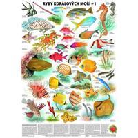 Ryby korálových moří I. - nástěnná tabule ( 67x96 cm )