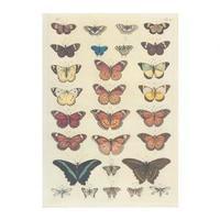 Naši motýli - nástěnná tabule ( 67x96 cm bez lišt )