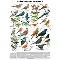 Ptáci střední Evropy V. - pěvci 1 nástěnná tabule ( 67x96 cm )