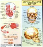 Kostra a svalstvo člověka  (leporelo A6 - 12str.)