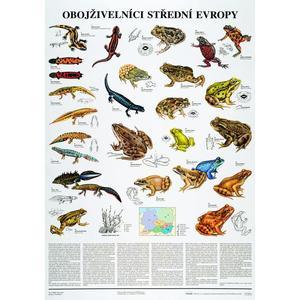 Obojživelníci střední Evropy - nástěnná tabule ( 67x96 cm )
