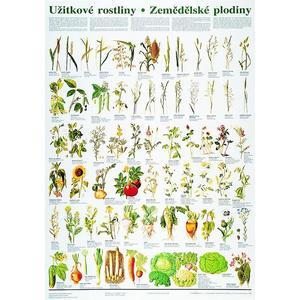 Užitkové rostliny / zemědělské plodiny - nástěnná tabule ( 67x96 cm )