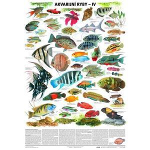 Akvarijní ryby IV. - nástěnná tabule ( 67x96 cm )